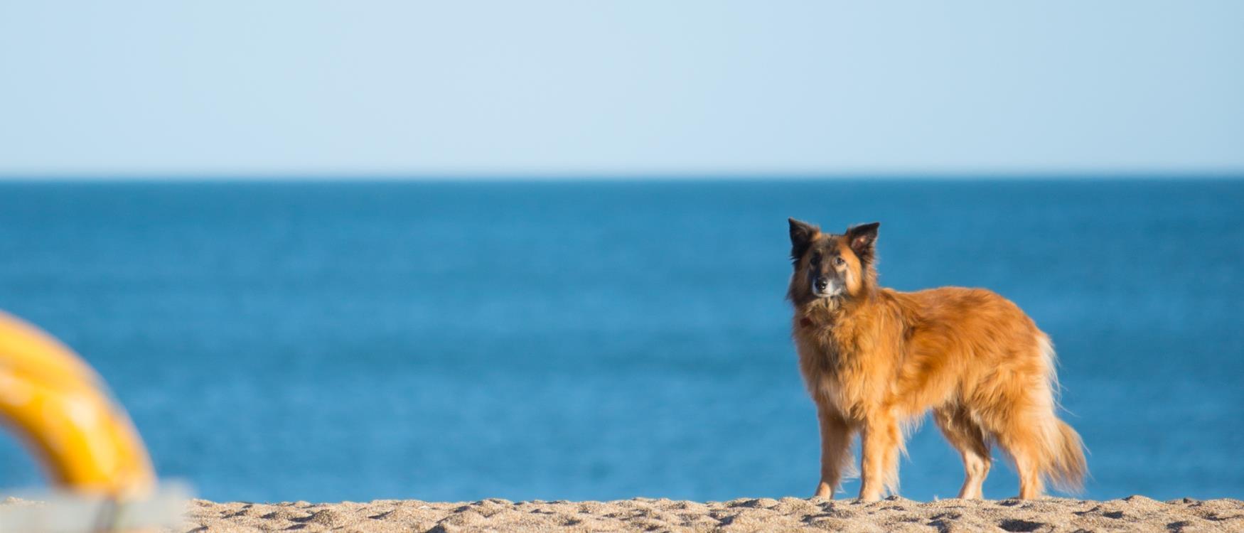 Is Paington Beach Dog Friendly