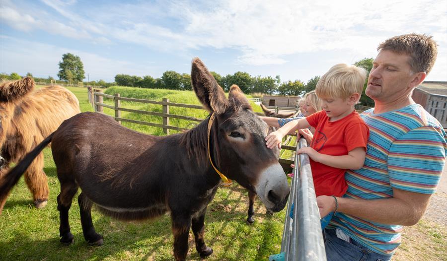 The Donkey Sanctuary - Visit South Devon
