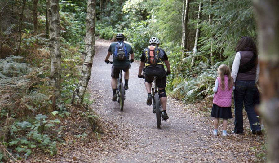 Haldon Forest Cycle Trails Visit South Devon