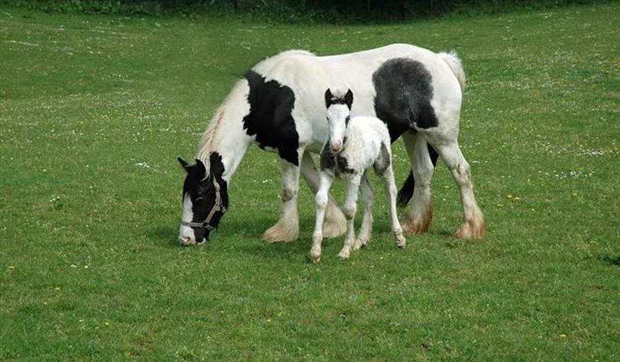 the mare and foal sanctuary visit south devon