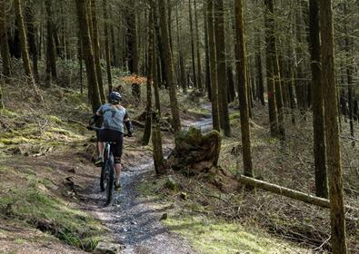 Cycling, Haldon Forest