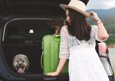 Traveling with Pets: Top Tips and Advice