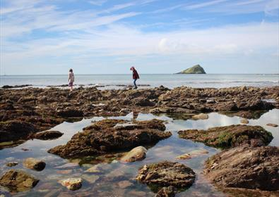 Rock pooling - wembury
