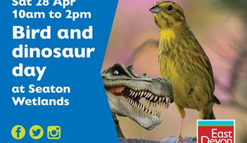 Birds and dinosaurs activities