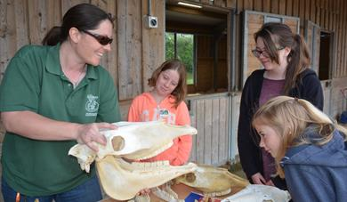 Aspiring junior vets learn about equine veterinary care