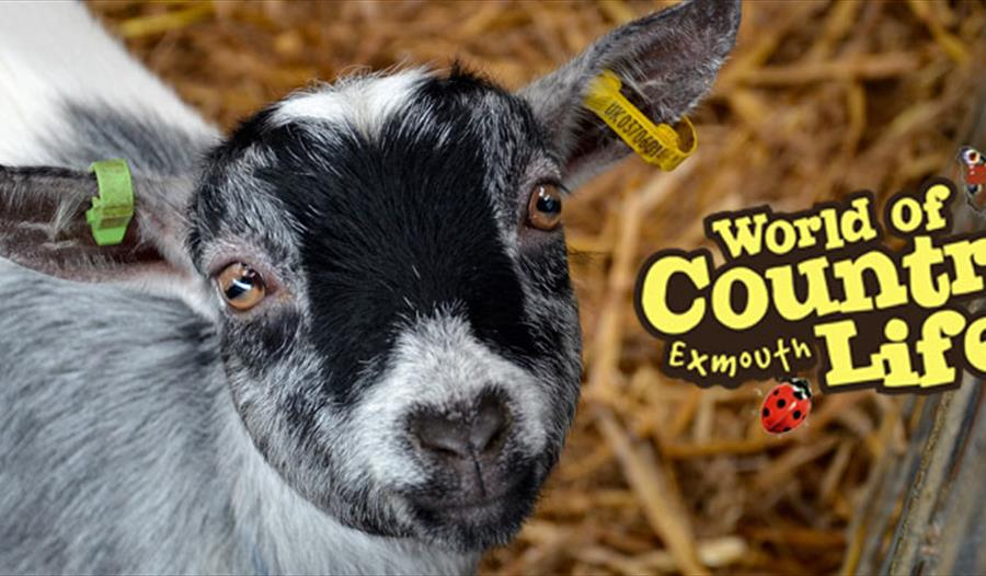 February Half Term at World of Country Life, Exmouth, Devon