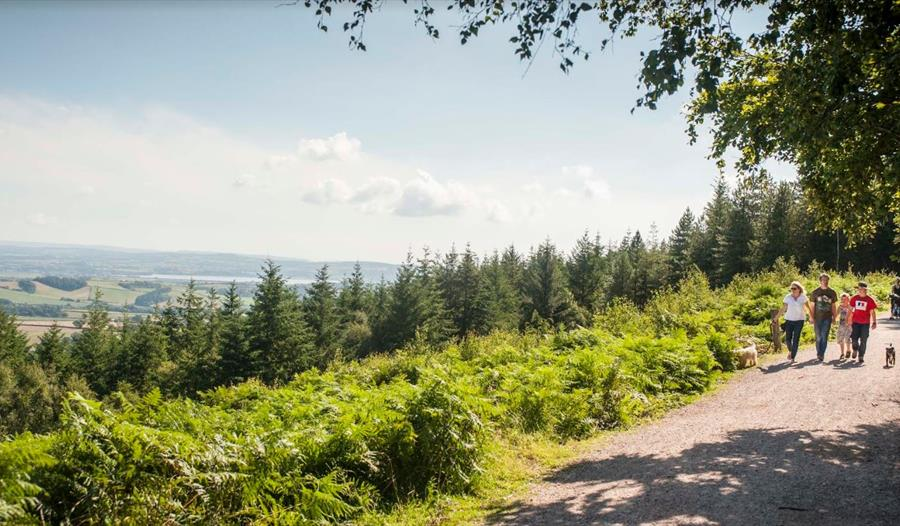 Haldon Forest Park - Forestry Commission - walking with view