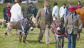 Donkeys Show, South Devon