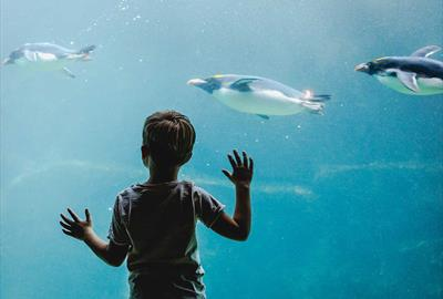 Underwater penguin viewing at Living Coasts
