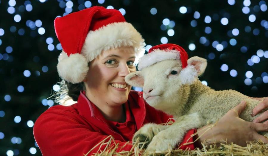 Christmas at Pennywell Farm