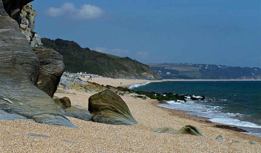 Dog Friendly Attractions Near Sidmouth