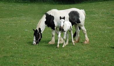 The Mare and Foal Sanctuary