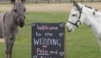 Weddings at the Donkey Sanctuary